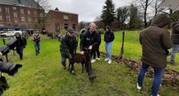 L'IESPP adopte deux moutons pour entretenir ses espaces verts