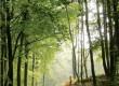 Fêtez le « Week-end du bois » à la Ronde Maison !